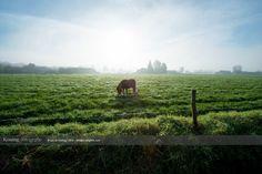 Natuurfoto's in het vierkant Apeldoorn, Klarenbeek, Voorst en omgeving vliegveld Teuge