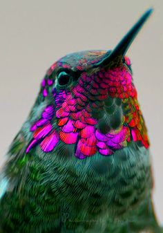 "I discovered this photograph of a Hummingbird on Pinterest which I personally thought was beyond stunning! During my ""Fashion & Design"" lesson with Sarah I had to select 10 images, then I had to manipulate them using different filters and effects. This is one of the images that I manipulated by changing the colours of the feathers."