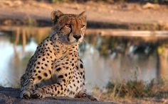 andBeyond Ngala Safari Lodge Timbavati Game Reserve, Kruger National Park, Limpopo, South Africa