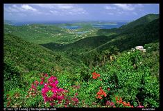 Tropical flowers and forest from Centerline road. Virgin Islands National Park (color)