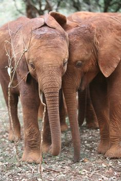 Chemi Chemi with Mutara, the elephant i've adopted.