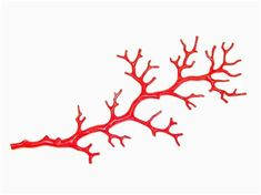 sculpted coral branch, cast in resin and lacquer finish, there is a hook on back, x Coral Drawing, Medusa, Underwater Drawing, Branch Tattoo, Flower Line Drawings, Coral Design, Coral Print, Expressive Art, Coral Jewelry