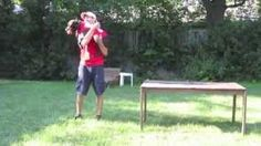 Pit Bull and Trainer using some advance obedience linked together.  Mannered Mutts Dog Training - YouTube