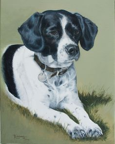 "'Ollie'. Springer spaniel by Tania Robinson. Private commission 2013. 12""x16"" acrylic on canvas."