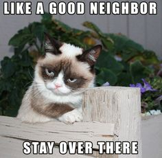 grumpy cat /  I really need to start doing yard work, but someone always has to stop when they go by or they make comments about what you were doing in the yard the next time you run into them.  Really????  Really????  Wish I had a huge privacy fence!!!