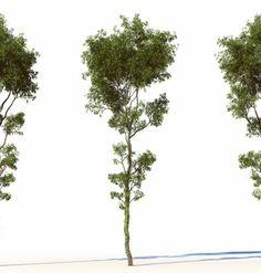 High Tree – 0001 |  CG-Projects – 3D Archviz, Animation & Store