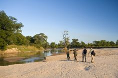 Famous for its walking safaris, this thatched safari camp has a remote setting in Zambia's South Luangwa & is ideal for honeymoons. Kilimanjaro, Snorkelling, Travel Articles, Greatest Adventure, Canoe, Trekking, Safari, Dolores Park, Scenery