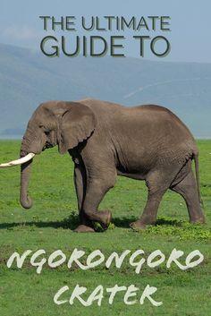 Head to the Ngorongo