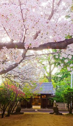 Japan... I will definitely get there someday in this lifetime. because I know I lived there once...