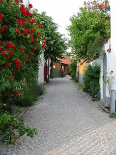 Gotland - Visby (04 Juillet 2006) | Flickr - Photo Sharing!  (Pinner, this lovely street and landscape is in Sweden, near the area of Visby, Sweden!