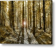 Forest At Sunset Acrylic Print By Gary Walker