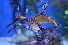 Espectáculares imágenes de unos animales acuáticos en un acuario de California