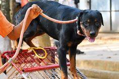 Cochin Dog Training Academy, Kerala
