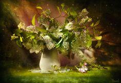 Bird-cherry blossoms by Svetlana Avanesova on 500px