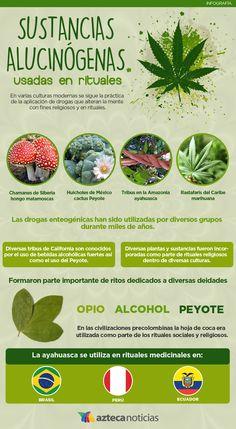 Sustancias alucinógenas usadas en rituales #infografia