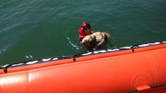 A petición de SOS Deiak, activada la base de Cruz Roja del Mar de #Arriluze; 2 perros caídos al agua en Muelle de Churruca y #Algorta. Han sido rescatados con éxito