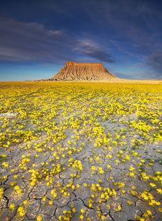 """Photo by Adam Barker Photography """"Badlands deserto"""" Beautiful World, Beautiful Places, Beautiful Pictures, Beautiful Flowers, Desert Flowers, Wild Flowers, Yellow Flowers, Colorful Flowers, Yellow Plants"""