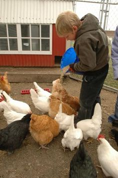 Great tips for taking care of chickens in the winter.