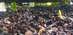 Bush lily (Clivia miniata) seedlings 😍 #bush #lily #lillies #shadeplants #plants ##nature #photography #naturephotography #love #photooftheday #beautiful #art #picoftheday #photo #like #landscape #follow #naturelovers #happy #bhfyp #style #life #beauty #travelphotography #photographer #bhfyp Nature Photography, Travel Photography, Shade Plants, Trees To Plant, Lily, Landscape, Fruit, Happy, Beautiful