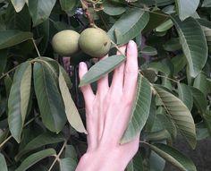 Orzo, Geraniums, Apple, Fruit, Herbal Medicine, Turmeric, Apple Fruit, Apples