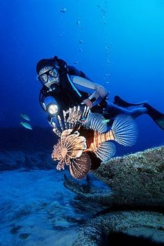 Know more about the Scuba Diving in Mauritius Information on Scuba Diving in Mauritius,Online Booking for Scuba Diving Tours to Mauritius