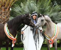 Champino Arabian in the Middle East