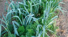 Asociación de cultivos y hortalizas | Sergi Caballero
