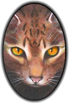 32 Best BrambleClaw images in 2014 | Warrior Cats, Warrior cats