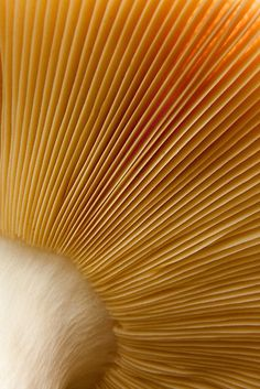 Mushroom underside close-up by Daniel Cadieux