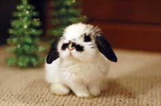 Teeny Tiny Bunny with a 'tash!