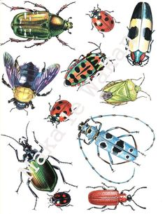 Insects Clipart - Digital Collage Sheet Instant Download Bugs Clipart Scrapbooking Beetles Découpage Insect Clipart, Bugs Drawing, Elephant Illustration, Bug Art, Beautiful Bugs, Clip Art, Desenho Tattoo, Insect Art, Guache