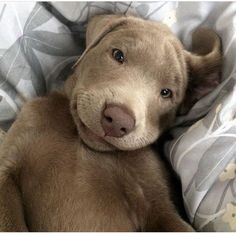 Oh my goodness, what a sweet face!!!