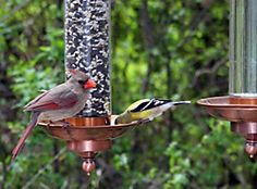 Perky-Pet® Copper Sip & Seed™ Bird Feeder