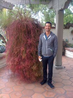 Red Rhipsalis - Google Search