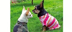 Eco-Pup Dog Clothing  http://www.prevention.com/health/healthy-living/7-eco-friendly-pet-products/eco-pup-dog-clothing