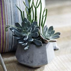 Check out the deal on Beautiful Small Planter Pot - Grey Concrete at NOVA68.com