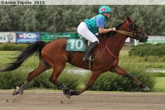 Monte racing, standardbred gelding Stoneisle Get On