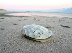 Oyster on Nantucket Sound 4:55pm. ©Christopher Seufert Photography