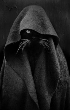 Jedi Cat Black Cat - Photography by Audrey Baschet. Funny Cats, Funny Animals, Cute Animals, Baby Animals, Crazy Cat Lady, Crazy Cats, I Love Cats, Cool Cats, Image Chat
