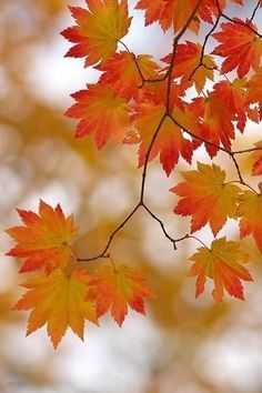 Gorgeous Shades of Fall