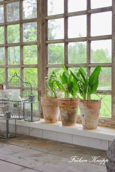 potted Lily of the Valley...sweet