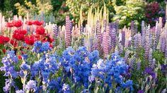 Praktický záhradkár: 7 aktuálnych prác v okrasnom záhone august