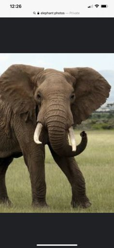 Elephant Artwork, Baby Things, Animals, Animales, Animaux, Animal, Animais