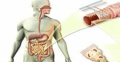 Toxins In Diet How To Clean Your Intestines From Mucus, Toxins And Fecal Deposits In Three Weeks Purifier Foie, Healthy Weight, Healthy Life, Healthy Food, Healthy Living, Stomach Cleanse, Vinegar And Honey, Cider Vinegar, Cleanser