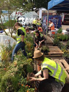 Agata Byrne, garden designer, participating in planting Fernando Gonzalez Pure Landscape Foundation Garden at RHS Chelsea Flower Show 2015