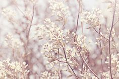 Hey, I found this really awesome Etsy listing at https://www.etsy.com/listing/172902386/white-blossoms-color-photo-print