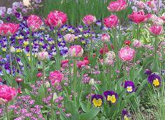 www.rustica.fr - 3 massifs à semer en été pour fleurir le printemps prochain