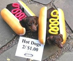 Sell themselves for money | Community Post: 24 Things Your Dachshund Can Do For You
