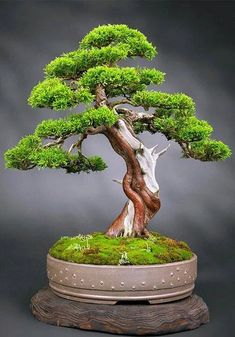 Bonsai Tree Ideas A Guide To Bonsai Trees For Beginners Bonsai Tree Ideas. The art form of bonsai can be a wonderful and unique hobby. Viewing and taking good care of a bonsai collection can be a r… Flowering Bonsai Tree, Bonsai Tree Care, Bonsai Tree Types, Bonsai Plants, Bonsai Garden, Bonsai Trees, Indoor Bonsai Tree, Indoor Plants, Bonsai Artificial