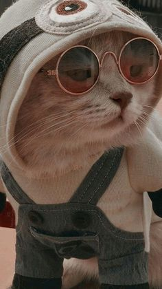 Funny Cute Cats, Cute Baby Cats, Cute Cats And Dogs, Cute Little Animals, Cute Kittens, Cute Funny Animals, Cool Cats, Funny Cat Wallpaper, Animal Wallpaper